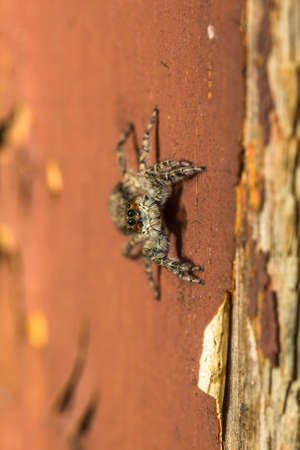 wood spider: Spider sitting on red painted wood close-up