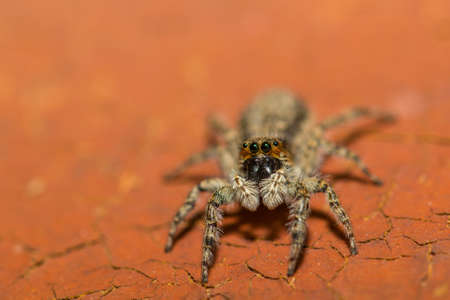 eight legs: Spider sitting on red painted wood close-up