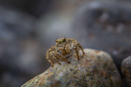 eight legs: Little spider sitting on the stone close-up Stock Photo