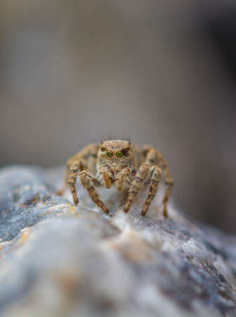 web2: Little spider sitting on the stone close-up Stock Photo