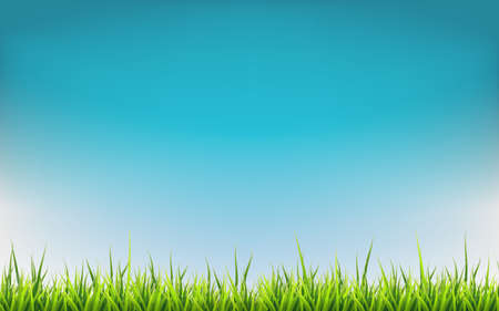 Spring banner with grass. Vector illustration background.
