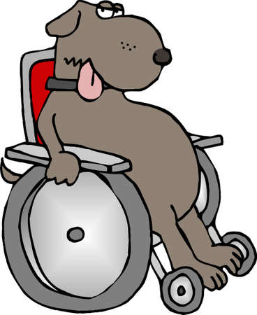 office cubicle: Dog in a wheelchair Stock Photo