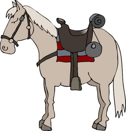 Paard en zadel