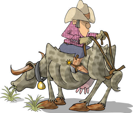 backwards: Cowboy on a cow, backwards Stock Photo