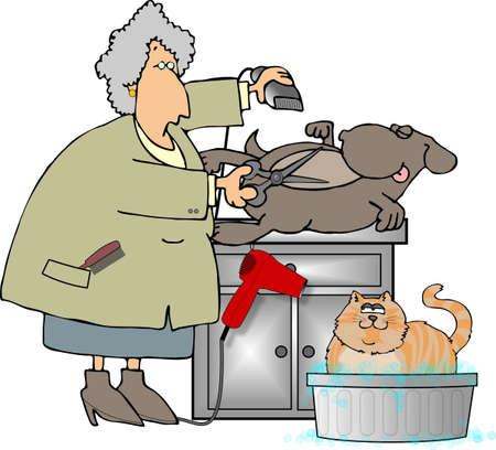 Pet Groomer Stock Photo - 437228