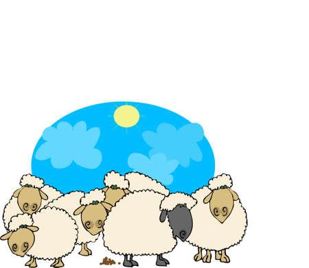 zwart schaap: Zwarte schapen