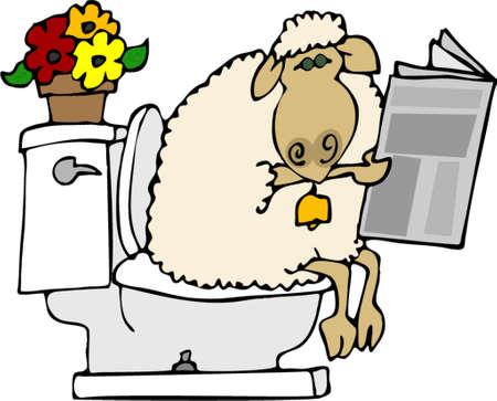 shit: Sheep shit