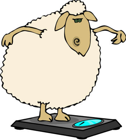 ewe: Dieting sheep