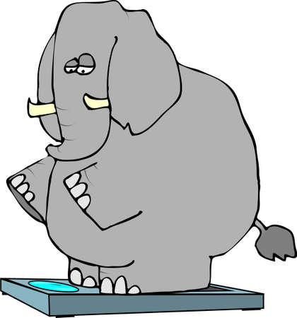 Elephant On Scales Stock Photo