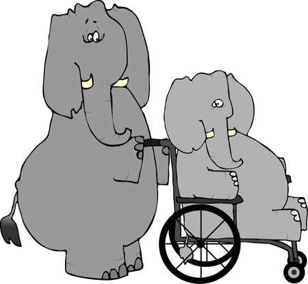 rehab: Elephant Rehab