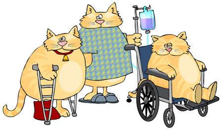 病気の猫 写真素材