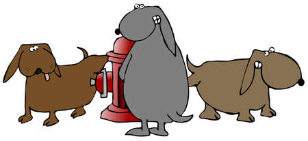 Three Dogs Peeing On A Fire Hydrant
