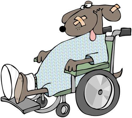 lesionado: Perro enfermo en una silla de ruedas