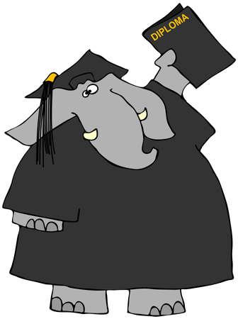 Elephant graduate 版權商用圖片