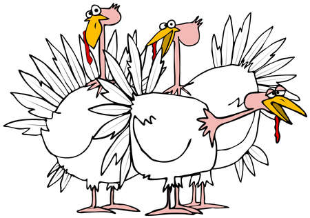 snood: Small flock of turkeys