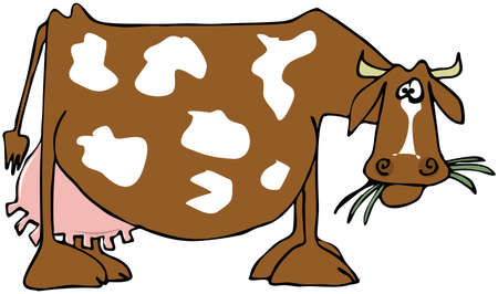 Cow with a large udder Stock Photo - 22081291