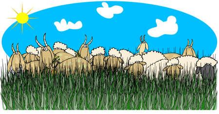 tall grass: Sheep   goats in tall grass Stock Photo
