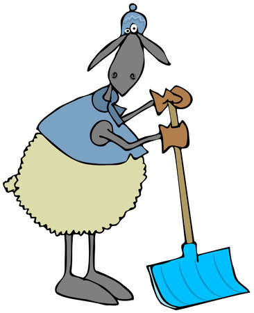 farm animal cartoon: Sheep leaning on a snow shovel