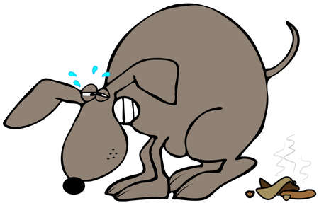 defecate: Dog straining to poop