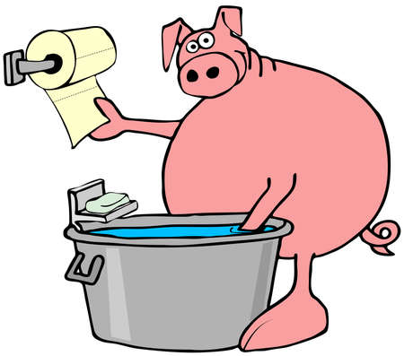 Pig washing and drying its hooves