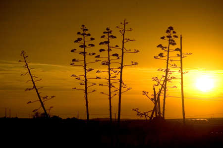 arise: Sunset Stock Photo