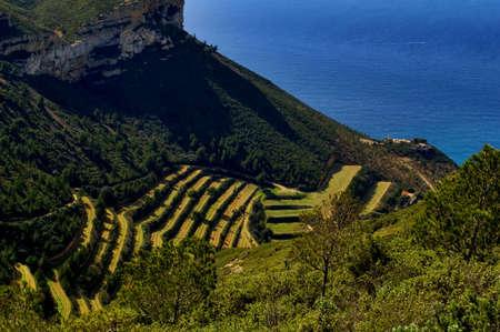 Sea and vineyard