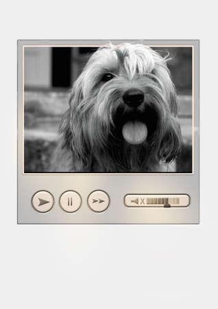Dog media player for internet