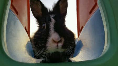 rabbit in cage: Rabbit