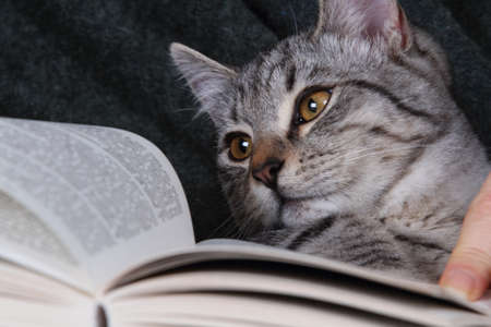her: cat reading a book on her arms Stock Photo