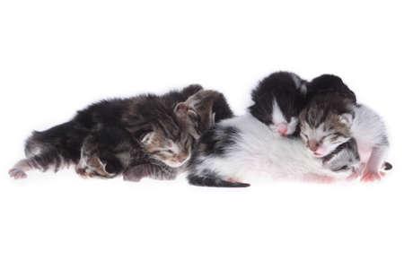 babysitting: small newborn kittens Stock Photo