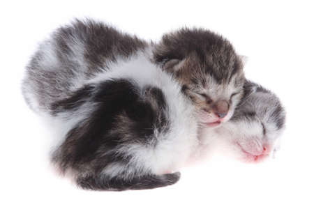 small newborn kittens Stock Photo