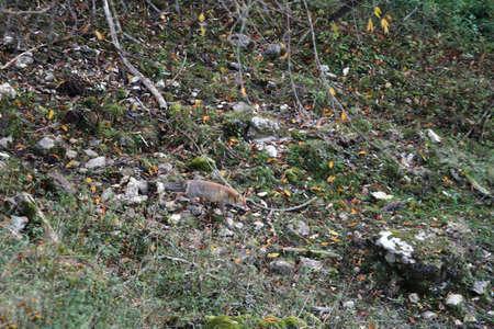 A fox in the Abruzzo national park near Civitella Alfedena