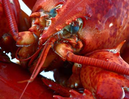 An intriguing very close view of a lobster. photo