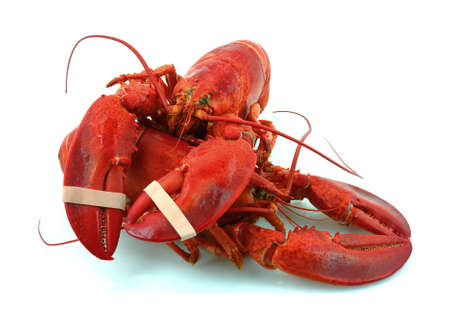 An interesting view of two lobsters and their great claws. photo