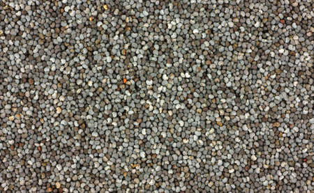 An interesting close view of poppy seeds. photo