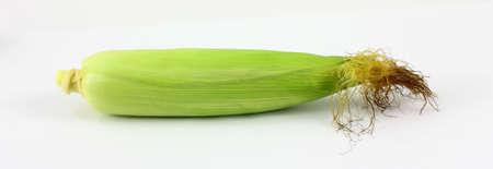 ear corn: Una gran vista de un fresco elegido solo o�do ma�z.