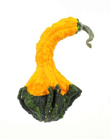 necked: Mooie gele en groene lang necked kalebas.