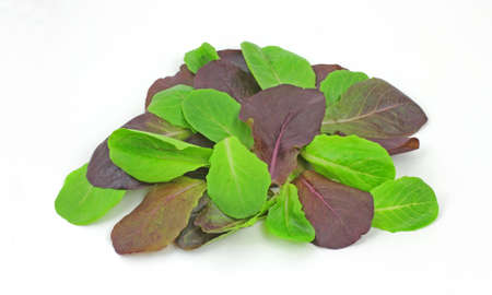romaine: A colorful view of baby romaine lettuce leaves.  Stock Photo