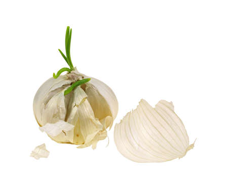 thin bulb: A  ripe bulb of fresh garlic cloves on white. Stock Photo