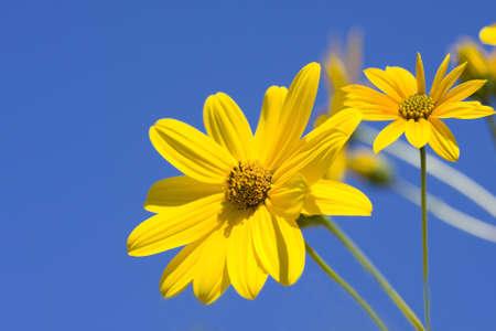 flowers Stock Photo - 9235500