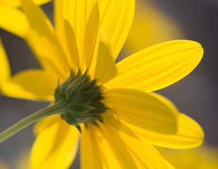 bloemen Stockfoto