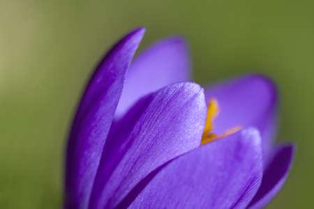 violet Stock Photo - 9236646