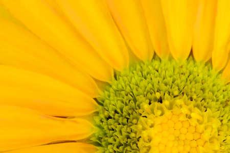 parte: detalle macro de la romantica margarita Stock Photo
