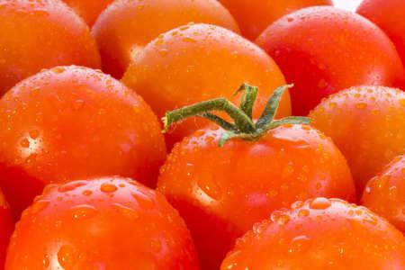 tomatoes Stock Photo - 9255397