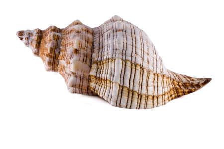 shell photo