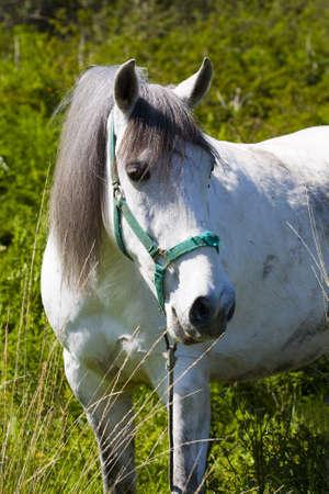 horses Stock Photo - 9255718