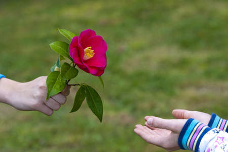 hands of children giving flowers as a symbol of friendship and love photo