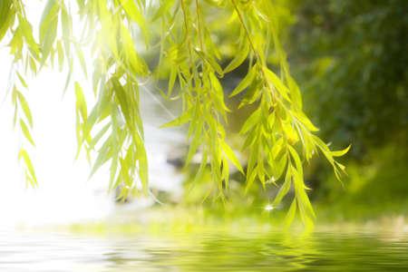 armonia: reflejo de las hojas en agua con glitter Foto de archivo