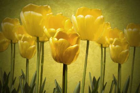 Tulpen Stockfoto - 10034308
