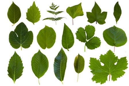Geïsoleerd groen blad collectie Stockfoto - 10129888